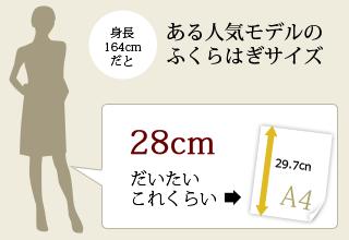 ある人気モデルのふくらはぎサイズ